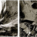 "Elizabeth Lee. ""Organic Diptych"". Medium: Photography. Dimensions: 17.5"" x 22.5"""